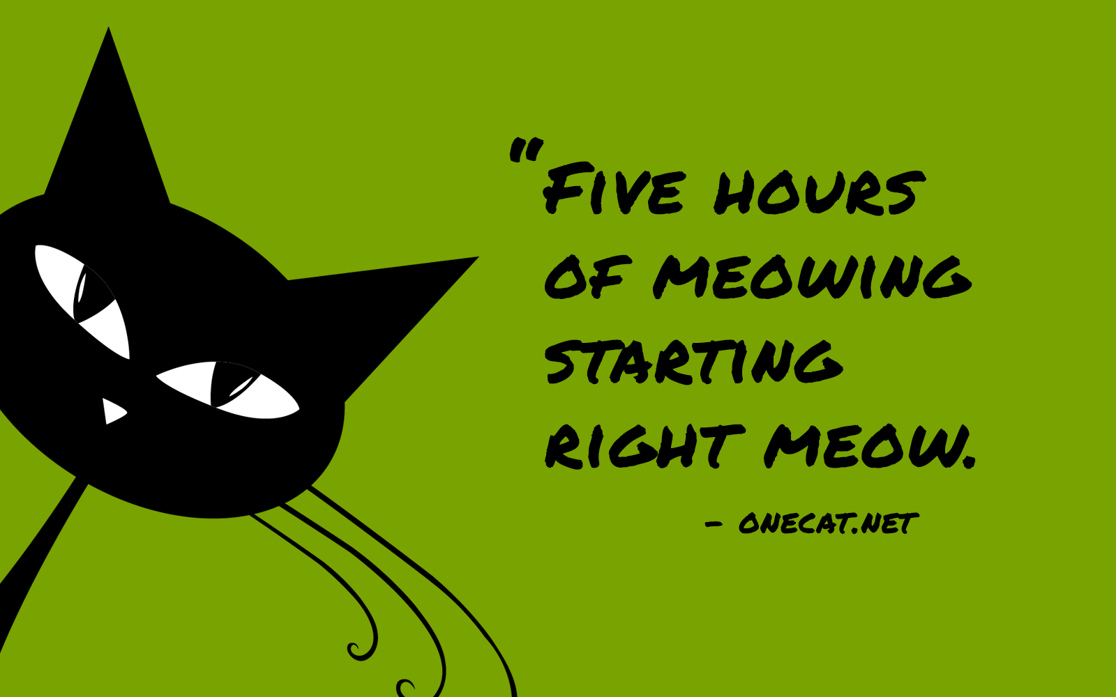 Five Hours of Meowing