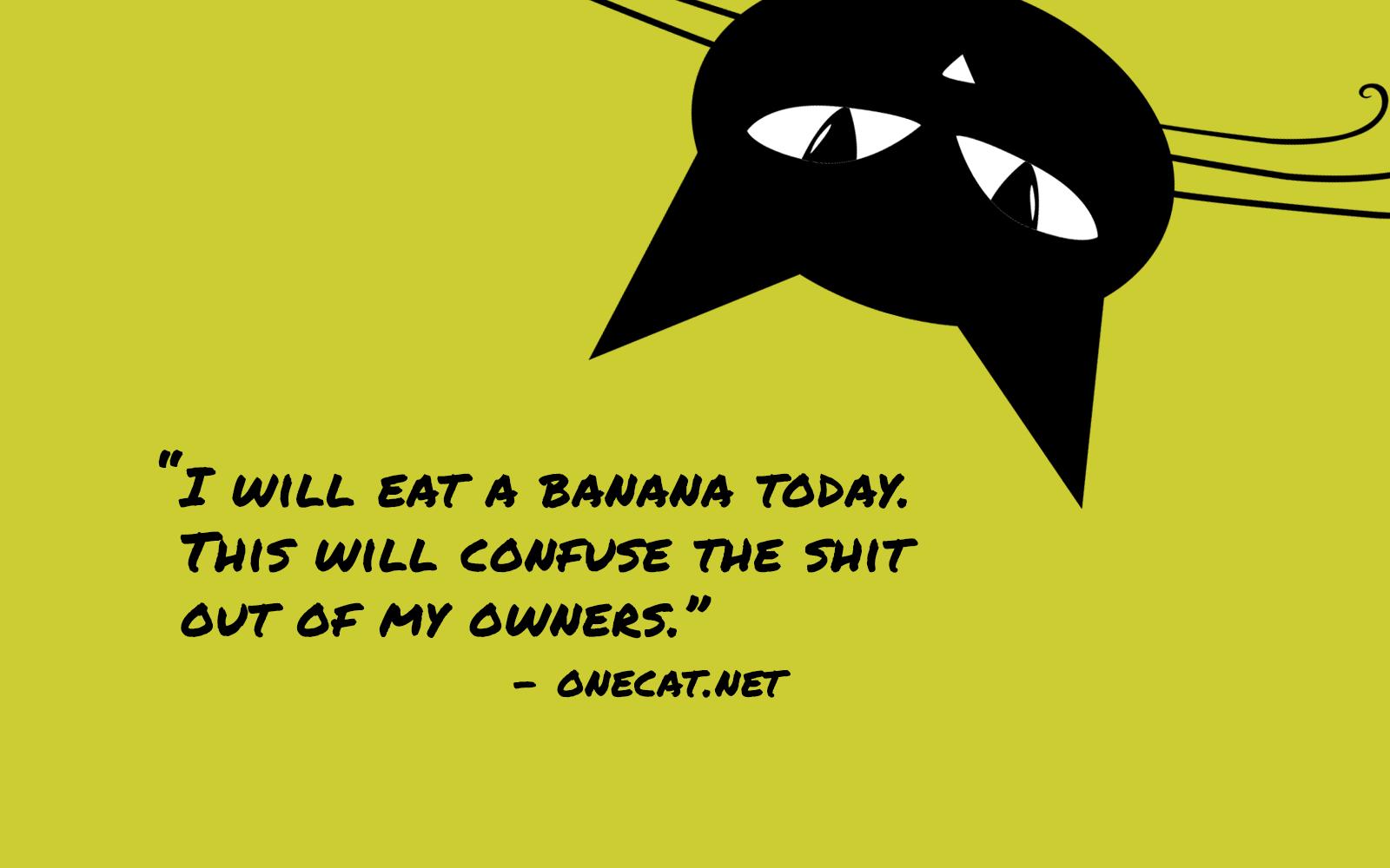 Cats and Bananas